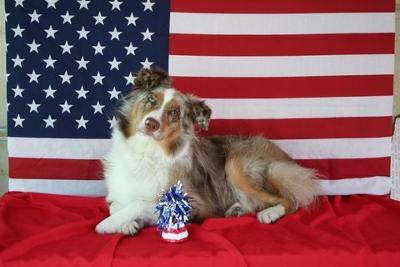 My All American Girl