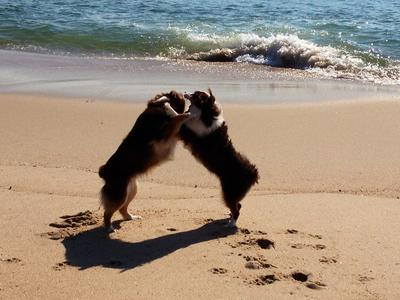 Penny and Scarlett playing on the beach!