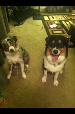 My two pups! Broly is Never camera shy!