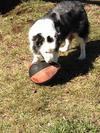 Aussie and his ball