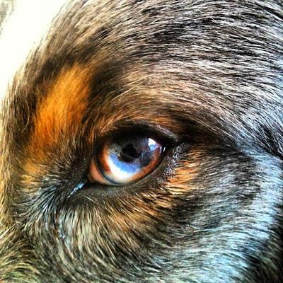 Mica's left eye
