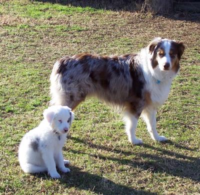Chiron and Bailey