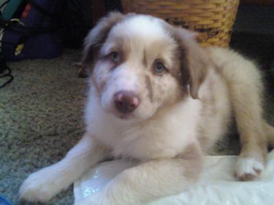 Zeke at 4 months