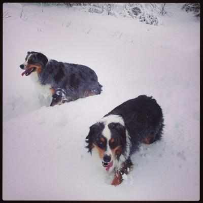 Love the Snow!!